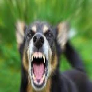 Michigan Dog Bite Attorney